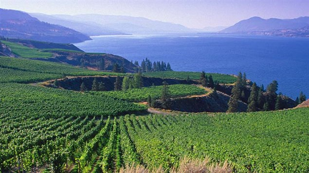 Kanada 131004_7z9u5_rci-wine-view_sn635