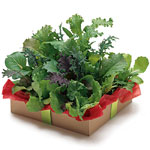 هواية تربية نباتات الزينه