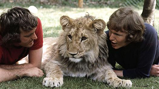 La historia de un león llamado Christian. Christian_lion_0330