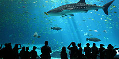 Десять популярных аквариумов мира World-aquarium_240x120