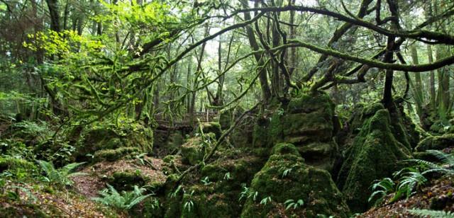 10 điểm đến bí ẩn nhất nước Anh Puzzlewoodengland640x308