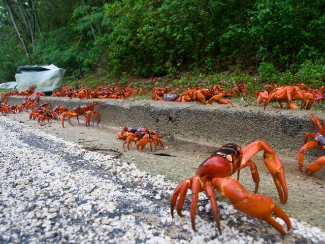 Những hiện tượng tự nhiên kỳ lạ nhất thế giới Zing_hientuong11