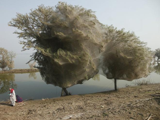 Những hiện tượng tự nhiên kỳ lạ nhất thế giới Zing_hientuong5