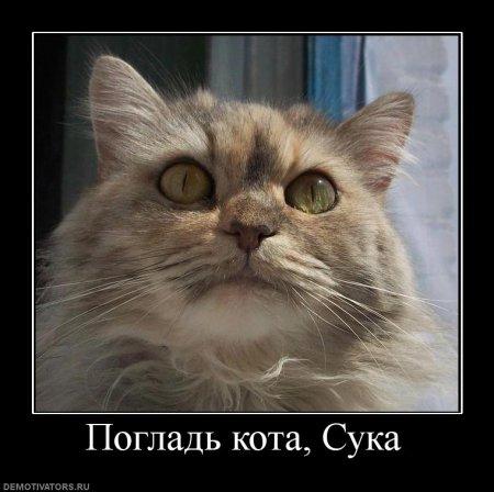 Кошачий юмор - Страница 12 Kot6