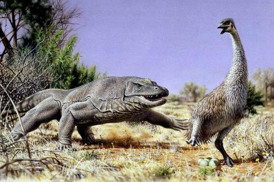 Ausgestorben oder ausgedacht? Tiere die es nicht (mehr) gibt! Ausgestorbener-australischer-Donnervogel