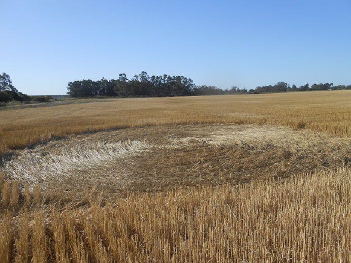 Crop Circles 2014.  Argentine-01-4514cdd