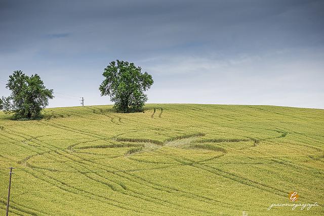 Crop Circles 2014.  - Page 5 Italie-01b-45cea5f