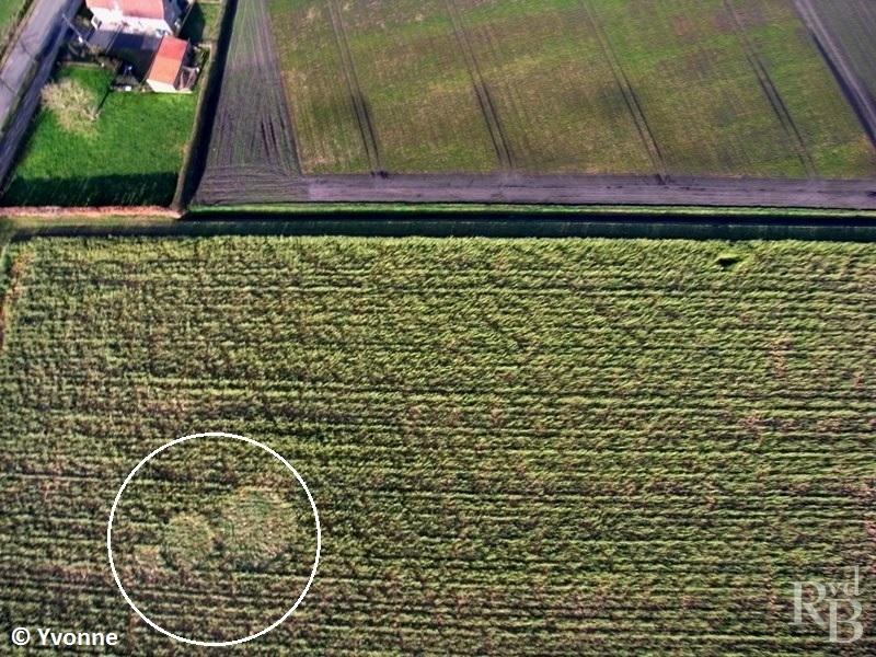 Crop Circles 2014.  Pays-bas-01c-43dc173