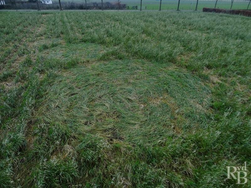 Crop Circles 2014.  Pays-bas-01a-43dc169