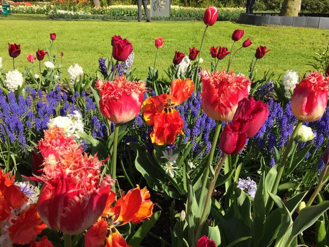Petit tour au Benelux (2/3) 03-tulipes-4b632eb