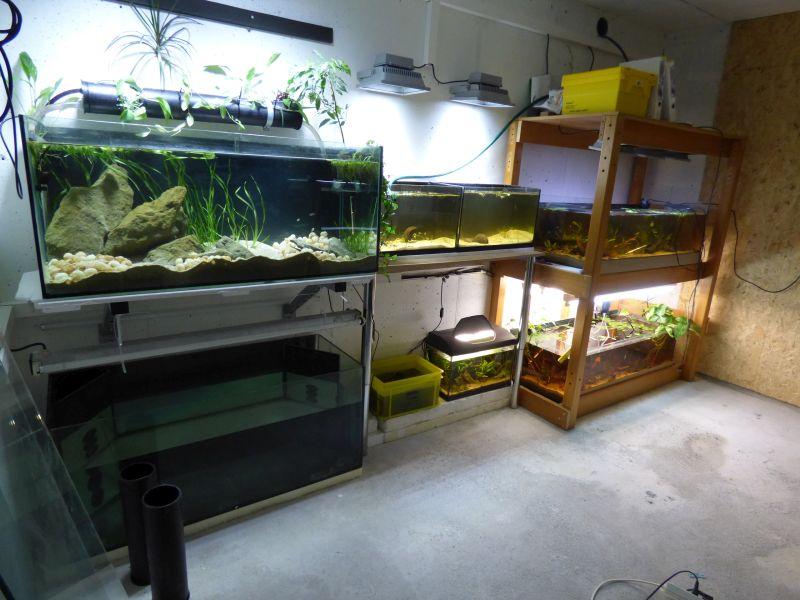 Ma petite fishroom - Page 5 P1010793-4c1fe97