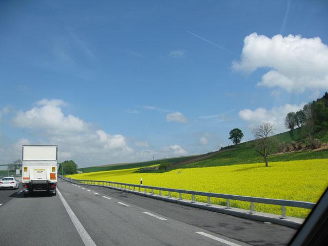 Petit tour au Benelux (1/3) 01-colza-4b43c71