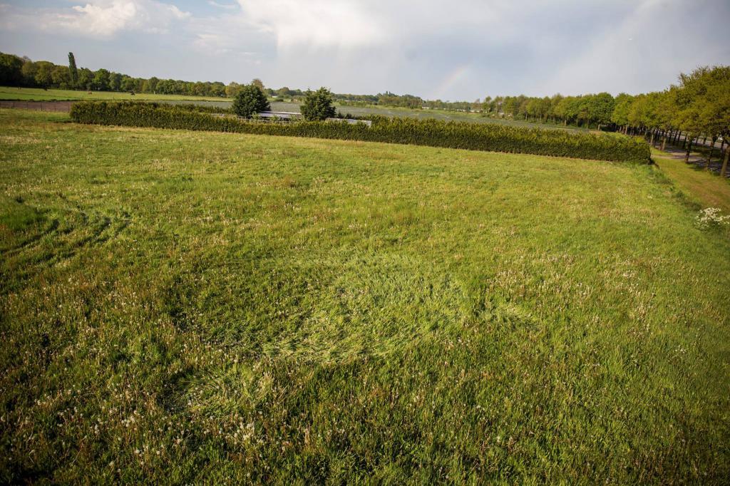 Crop Circles 2017.   Pays-bas-05-523dbf9