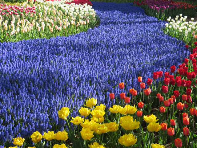Petit tour au Benelux (2/3) 07-fleurs-4b63340