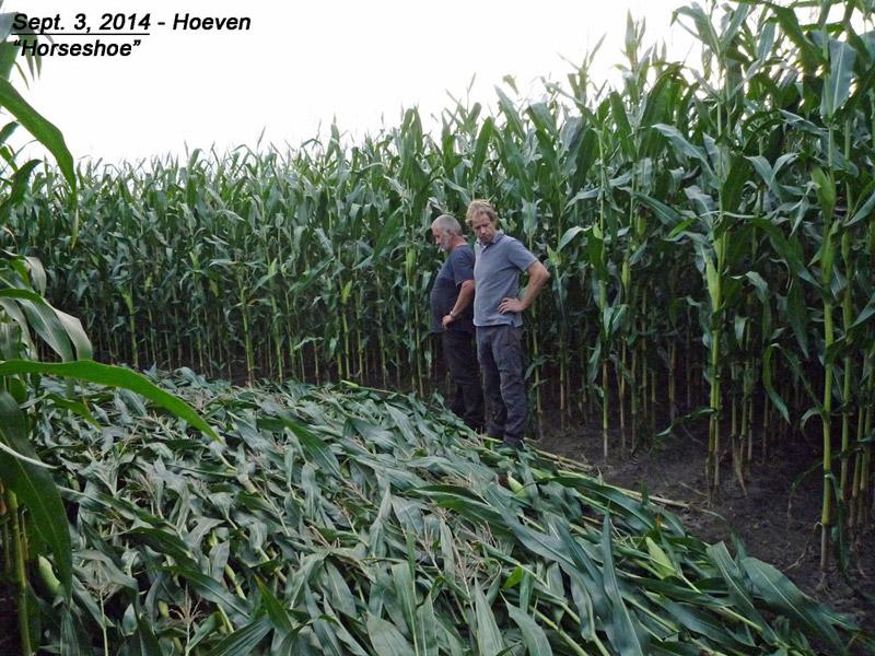 Crop circle dans la ville de Boskovice en juin Pays-bas-16f-4778ca1