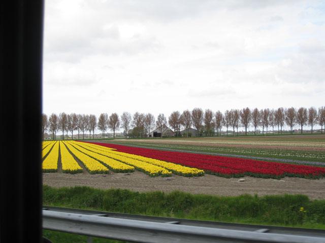 Petit tour au Benelux (1/3) 19-fleurschamps-4b4439f
