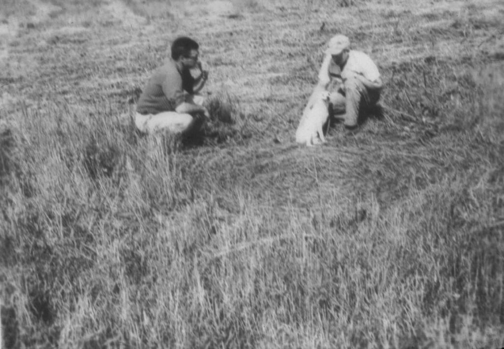 CROP CIRCLE CASE FILES: 1965 Photo-01-v67-739--525d3b3