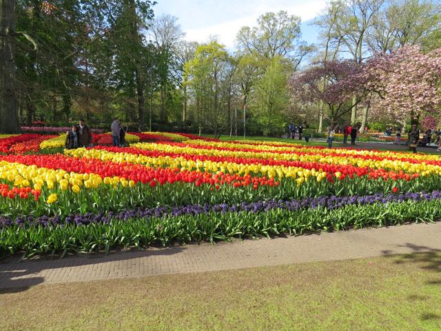 Petit tour au Benelux (2/3) 04-tulipes-4b632f3