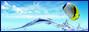 Tag logo sur ©Féline Pub | Forum de pub, codage, graphisme, annuaire web  Kefkxjdppngv-549967e