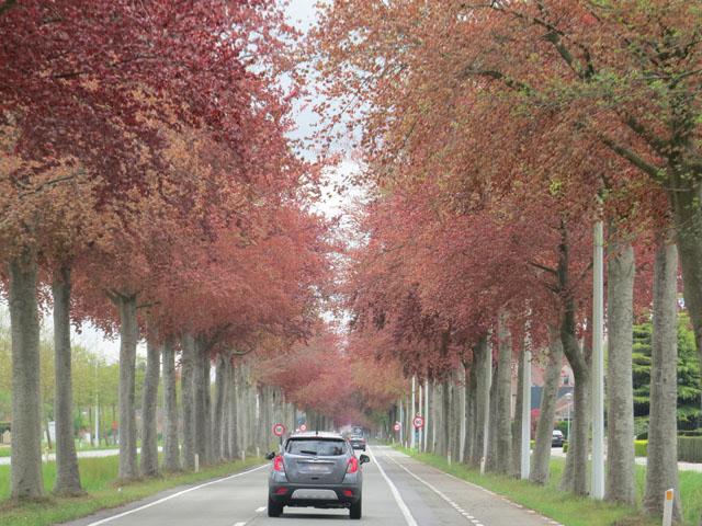 Petit tour au Benelux (3/3) 018-arbresrouges-4b9ef4e
