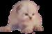 C - Forums des chatons
