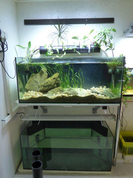 Ma petite fishroom - Page 5 P1010787-4c1fe99