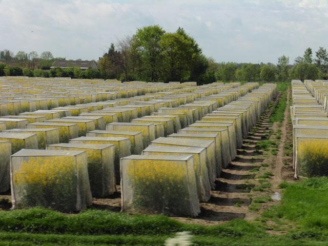 Petit tour au Benelux (3/3) 057-fleursjaunes-4bdd597