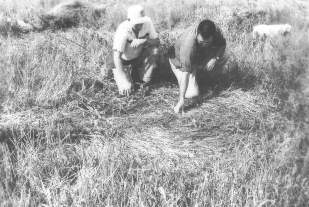 CROP CIRCLE CASE FILES: 1965 Photo-02-v67-734--525d3b7