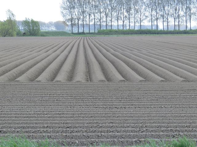 Petit tour au Benelux (3/3) 017-champbutte-4b9ef40
