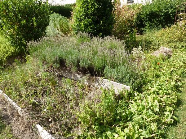 Le domaine de Madame Elisabeth P1060077-56c3280