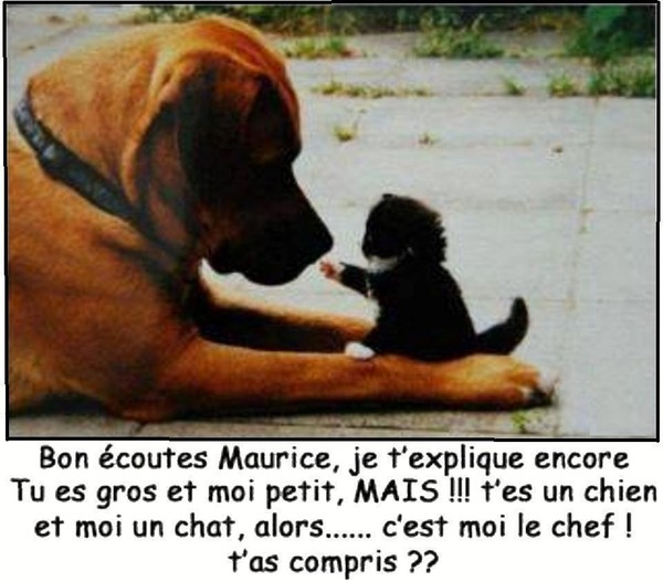 Animaux en Images  - Page 4 5f2f18ba-373ef80