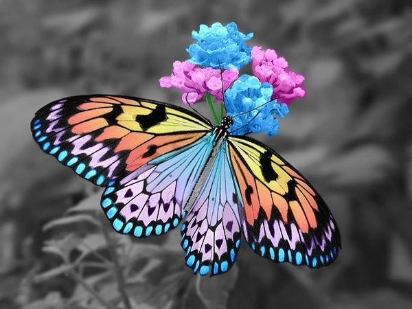 Le monde merveilleux des insectes - Page 2 Papillon-62-3be13e3