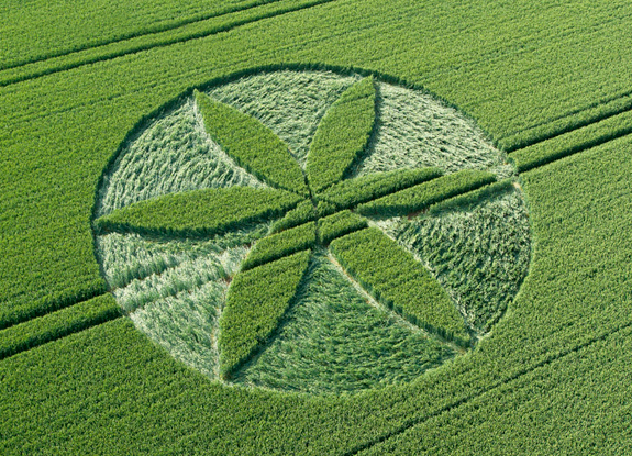 Crop Circles 2013. - Page 2 Gb1023-3f38064