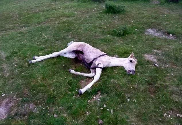 Suspicion de mutilation classique en Grande Bretagne Dartmoor-25.07.2013-02--4002ed3