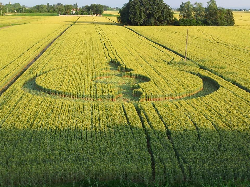 Crop Circles 2013. Italie-05-3edadc9