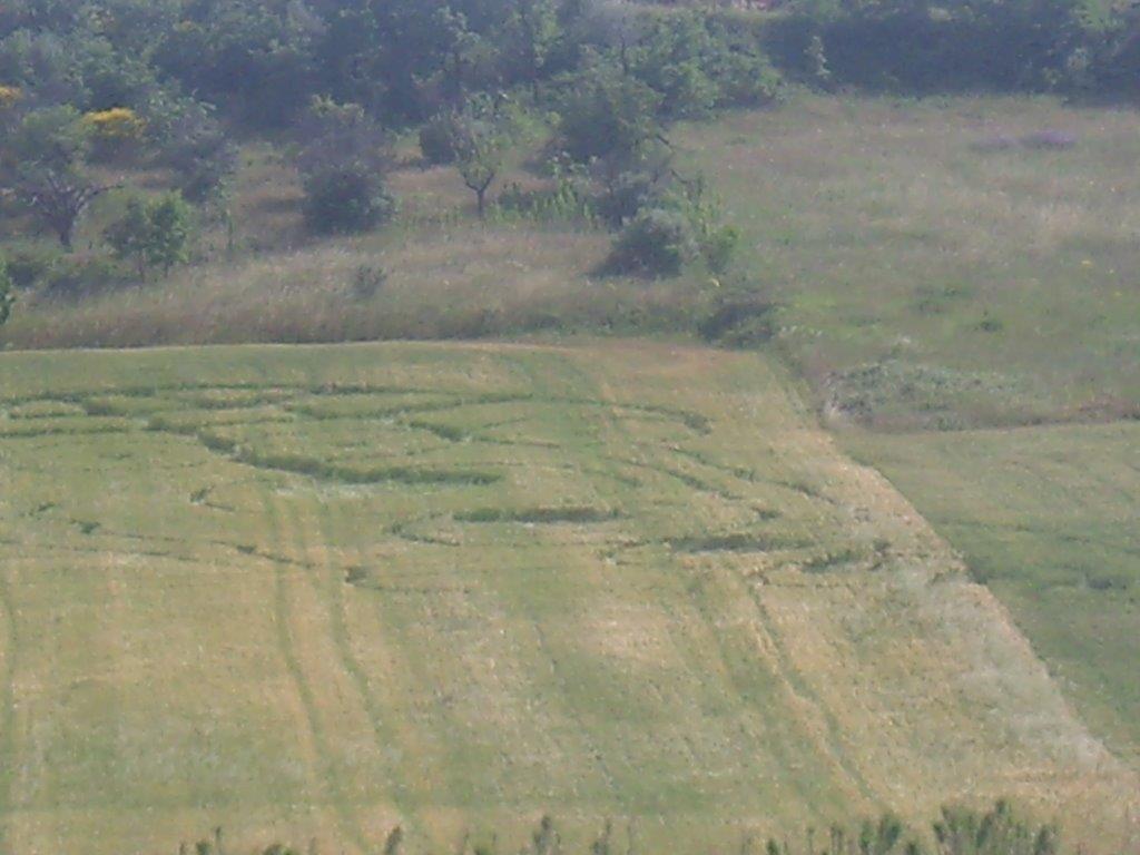 Crop Circles 2013. Italie-02-3e9e6f9