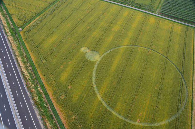 Crop Circles 2013. Barbiano2013a-3ec0d9c