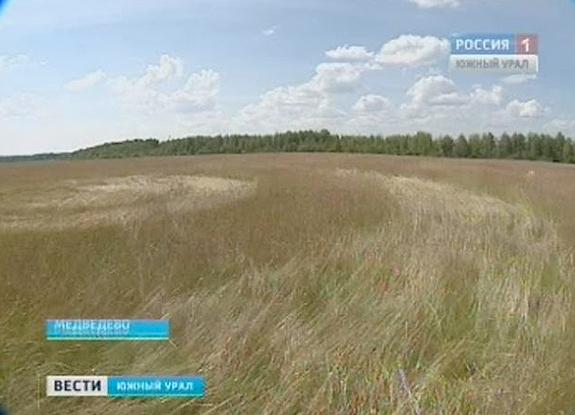 Crop Circles 2013. - Page 2 Russie-02-3f6091b
