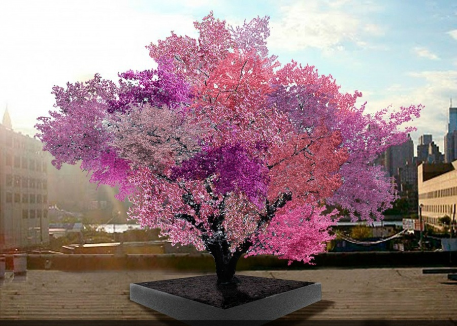 بالصور استمتع بجمال وسحر الطبيعة..أجمل 15 شجرة فى العالم 242181-%D8%B4%D8%AC%D8%B1%D8%A9-%D9%81%D8%B1%D8%A7%D9%86%D9%83%D9%86%D8%B3%D8%AA%D9%8A%D9%86