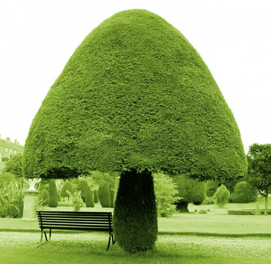 بالصور استمتع بجمال وسحر الطبيعة..أجمل 15 شجرة فى العالم 333260-%D8%AD%D8%AF%D9%8A%D9%82%D8%A9--%D8%A7%D9%84%D9%85%D8%B4%D8%B1%D9%88%D9%85