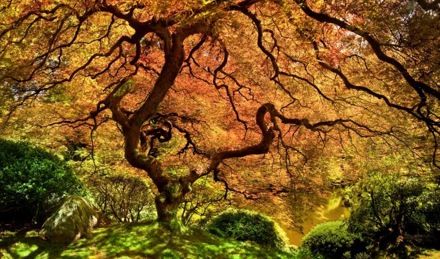 بالصور استمتع بجمال وسحر الطبيعة..أجمل 15 شجرة فى العالم 371283-%D8%A7%D9%84%D8%B4%D8%AC%D8%B1-%D8%A7%D9%84%D9%8A%D8%A8%D8%A7%D9%86%D9%89