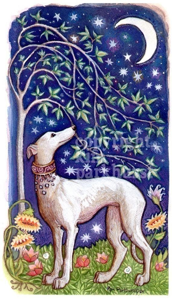 """Luz petite galguita de 3 mois """"Scooby France """" Adoptée """" - Page 6 Il_570xN.158313206"""