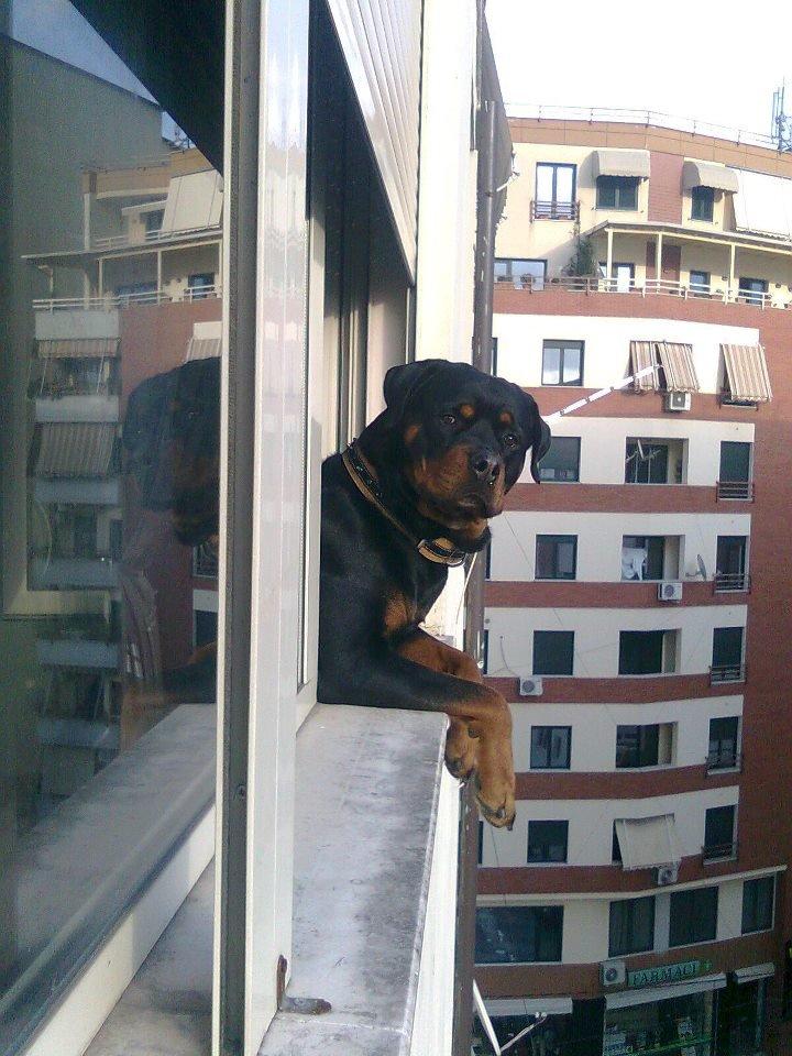 Čekajući na prozoru svoje vlasnike! - Page 2 Funny-pictures-auto-photo-dog-383574