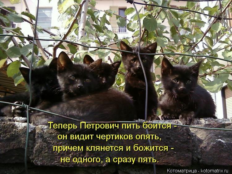 Котоматрица - 5 - Страница 11 104502332_large_kotomatritsa_I