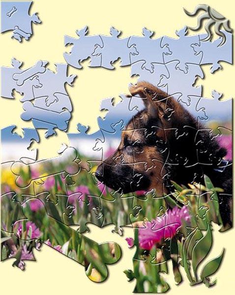 AV Bros. Puzzle Pro 3.0.Photoshop Plug-in 52444809_1260831387_1245815609_42c11ea66fc6