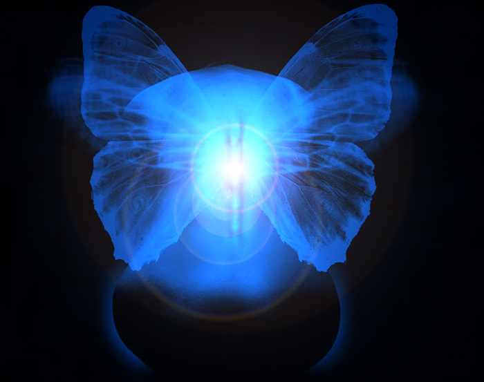 Bienvenidos al nuevo foro de apoyo a Noe #200 / 10.12.14 ~ 12.12.14 - Página 37 36532870_Butterfly_Dream_by_IrondoomDesign