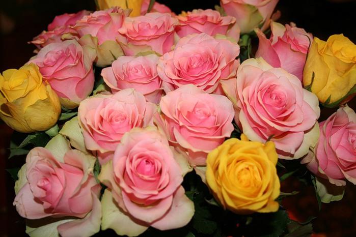 Lule dhe vetëm lule! 50037844_223
