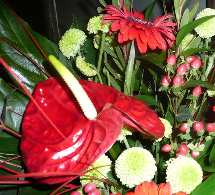 Lule dhe vetëm lule! 50037868_224