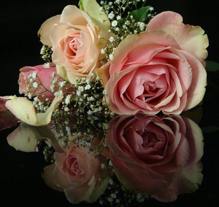 Lule dhe vetëm lule! 50037948_295