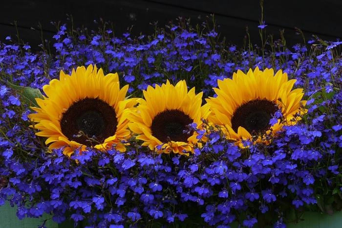 Lule dhe vetëm lule! 50038129_229